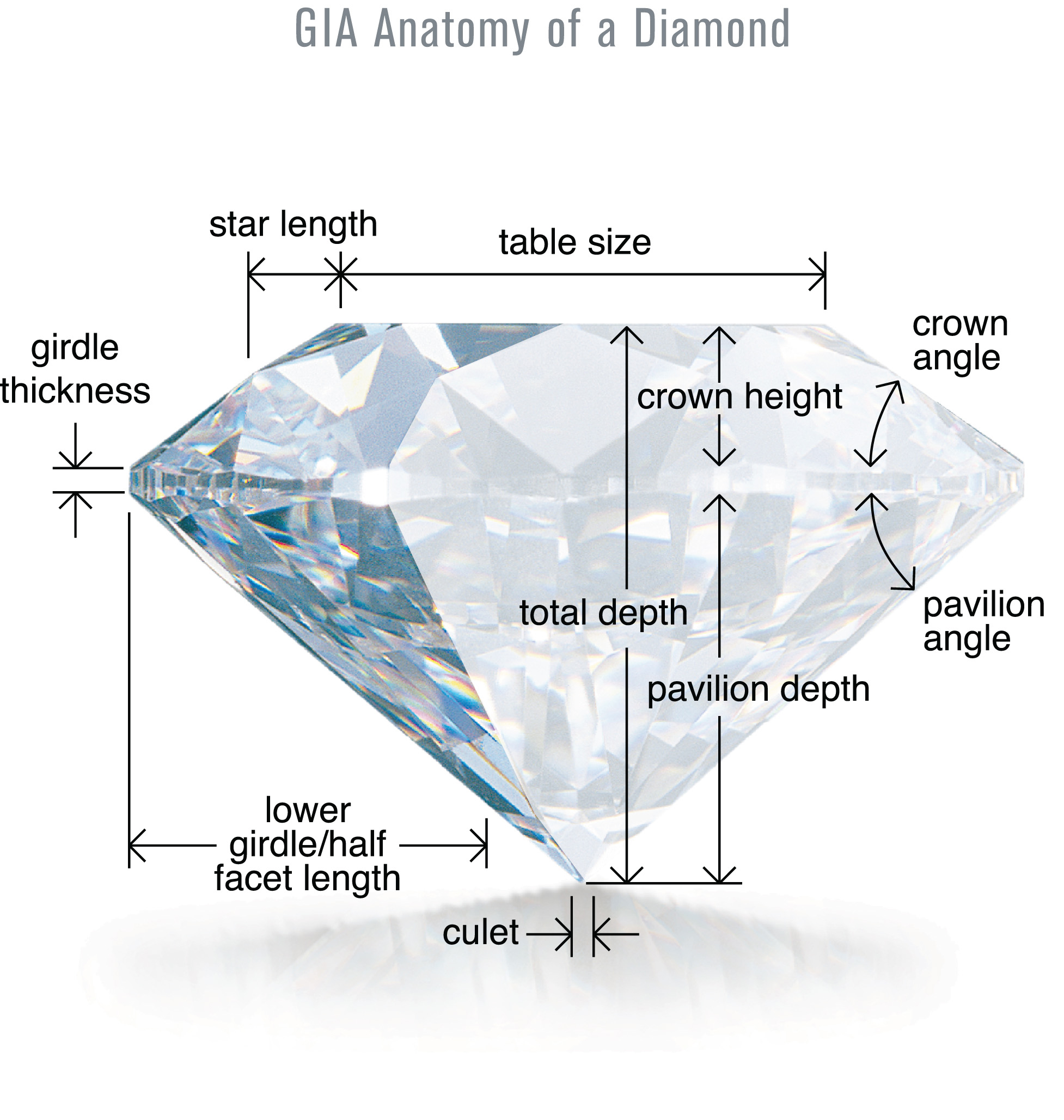 Diamond Cut/Anatomy